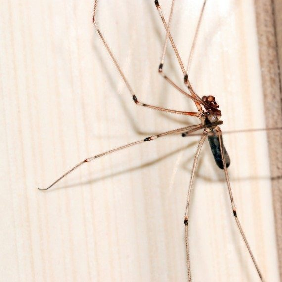 Spiders, Pest Control in Worcester Park, Cuddington, Stoneleigh, KT4. Call Now! 020 8166 9746
